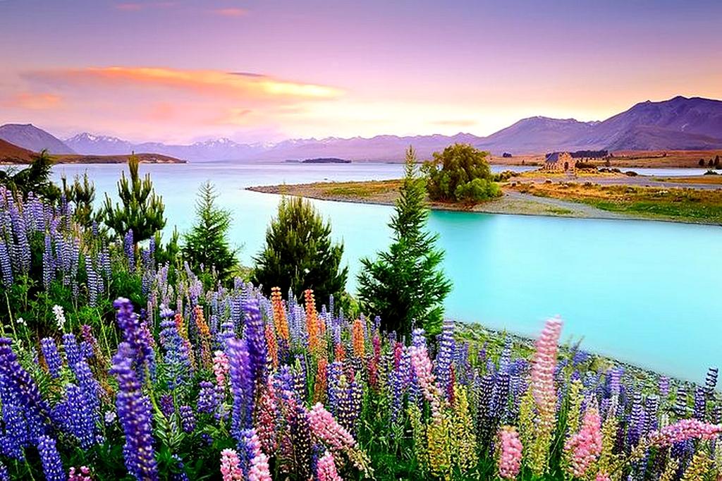 Lake-Tekapo-NZ